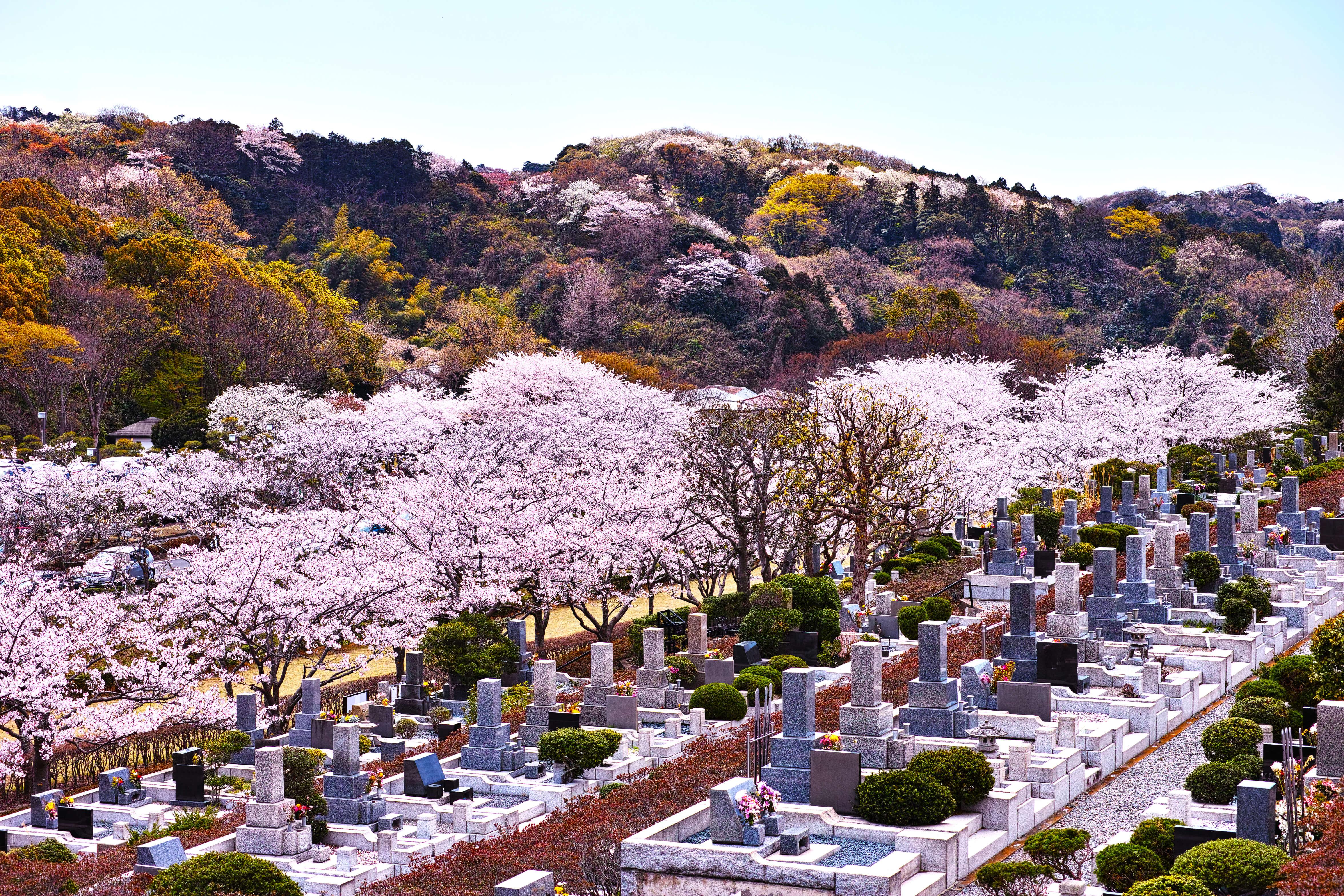 お墓と家の購入
